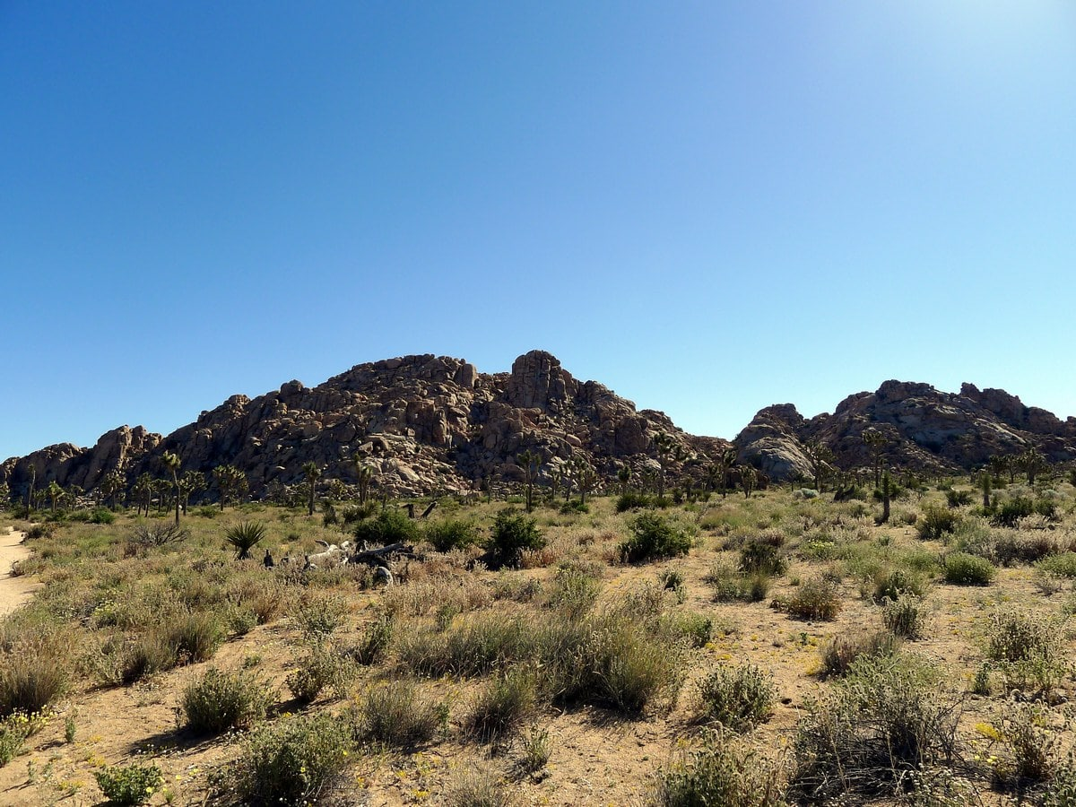 Rock formations along the Boy Scouts Trail Hike in Joshua Tree National Park, California
