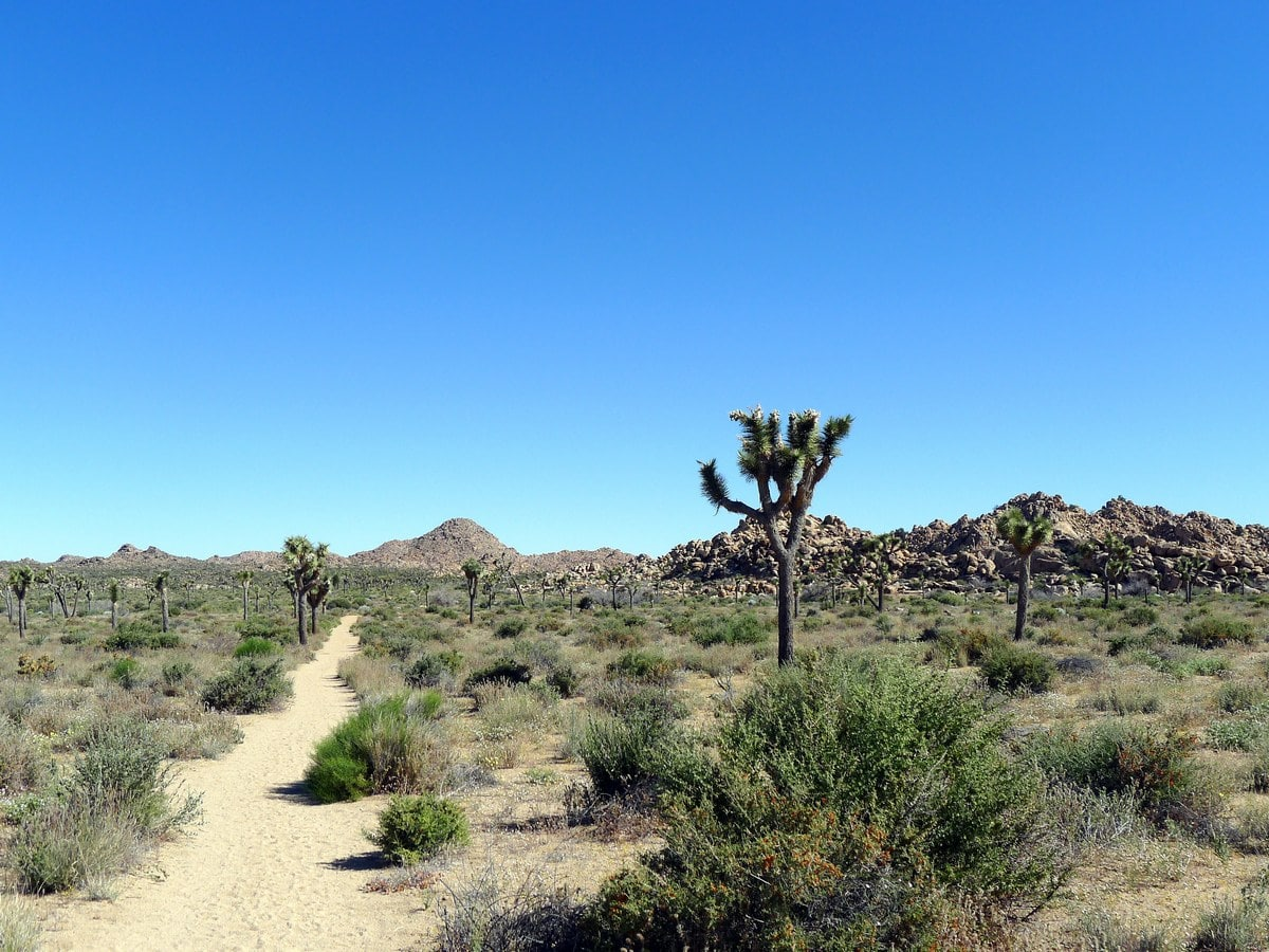 Views from the Boy Scouts Trail Hike in Joshua Tree National Park, California