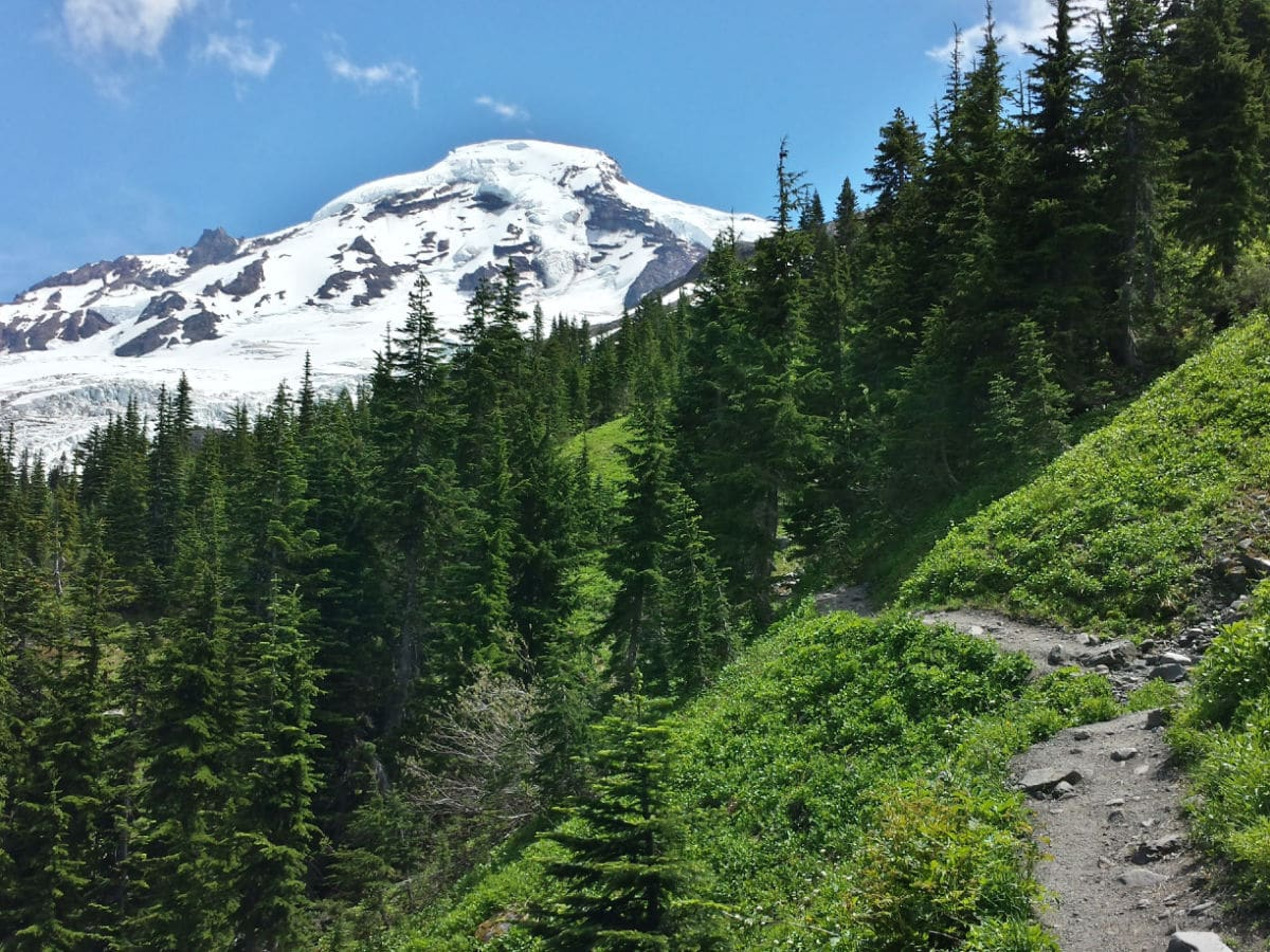 First view of Mount Baker on the Heliotrope Ridge Hike in Mt Baker, Washington