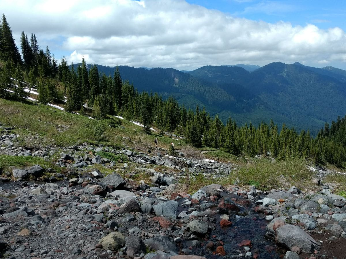 View north from the creek on the Heliotrope Ridge Hike in Mt Baker, Washington