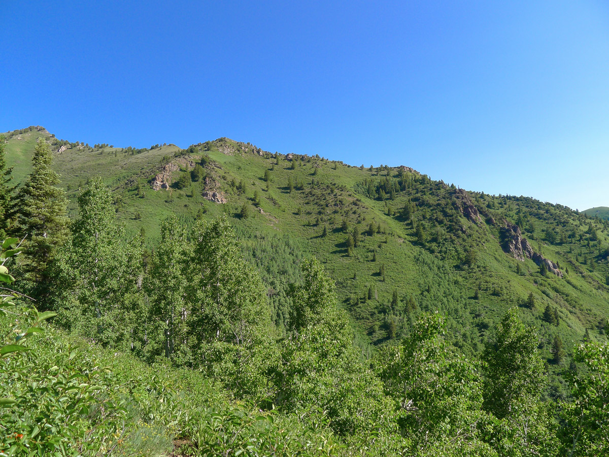 Mt. Raymond hike in Salt Lake City goes on a trail through the forest