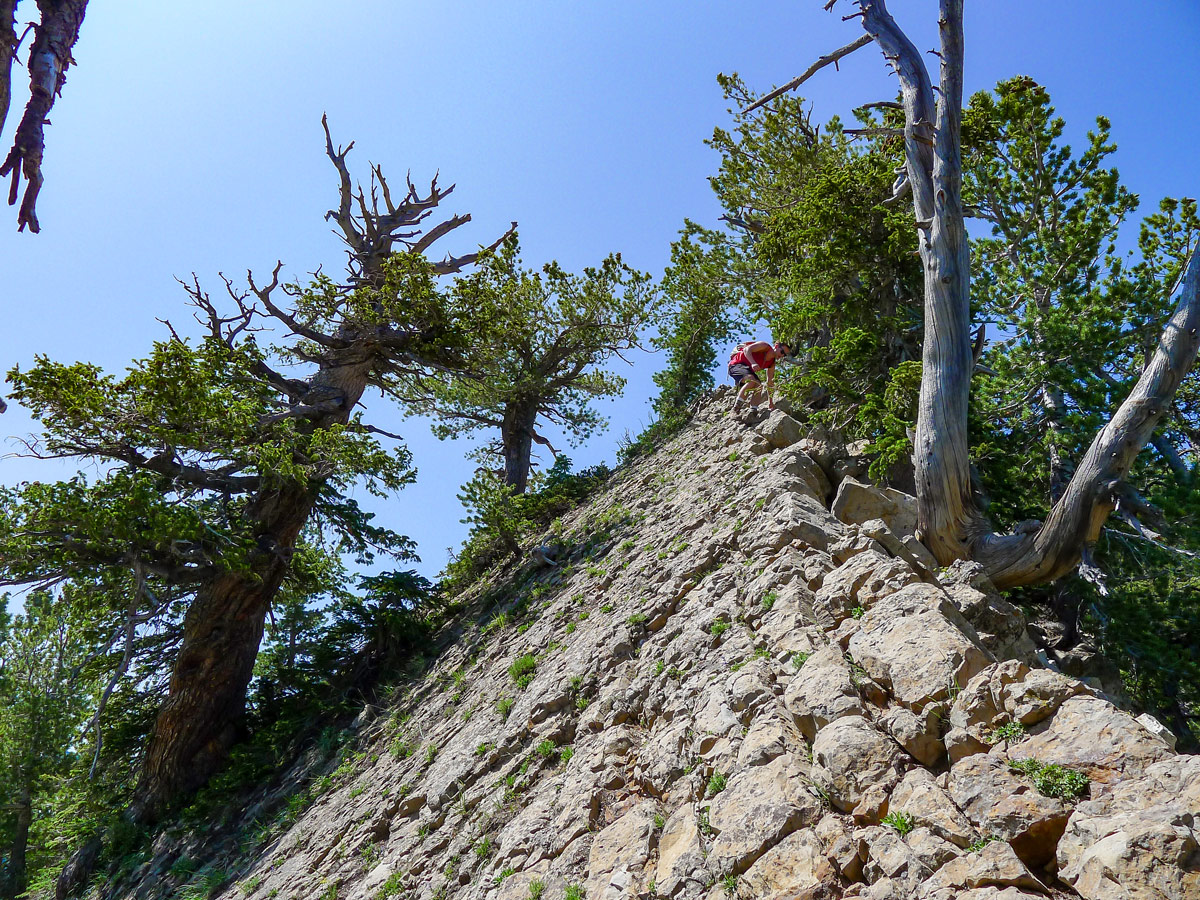 Mt. Raymond hike in Salt Lake City has a scrambly part of the trail