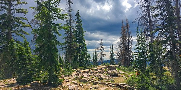 Trail of the Packard Lake hike in the Uinta Mountains