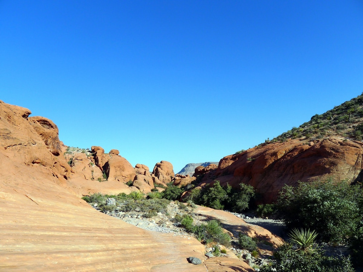 Trail of the Calico Hills Loop Hike in Red Rock Canyon near Las Vegas