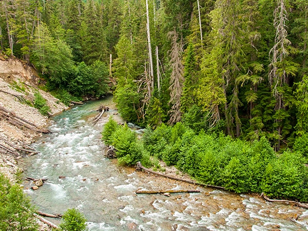 Views from the Thunder Creek Trail in North Cascades National Park
