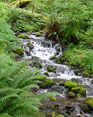 Scenery from Hoh River Trail in Olympic National Park, Washington