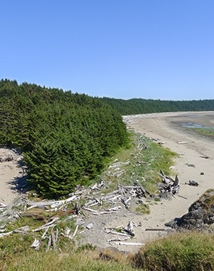 Trail of the Ozette Triangle hike in Olympic National Park, Washington
