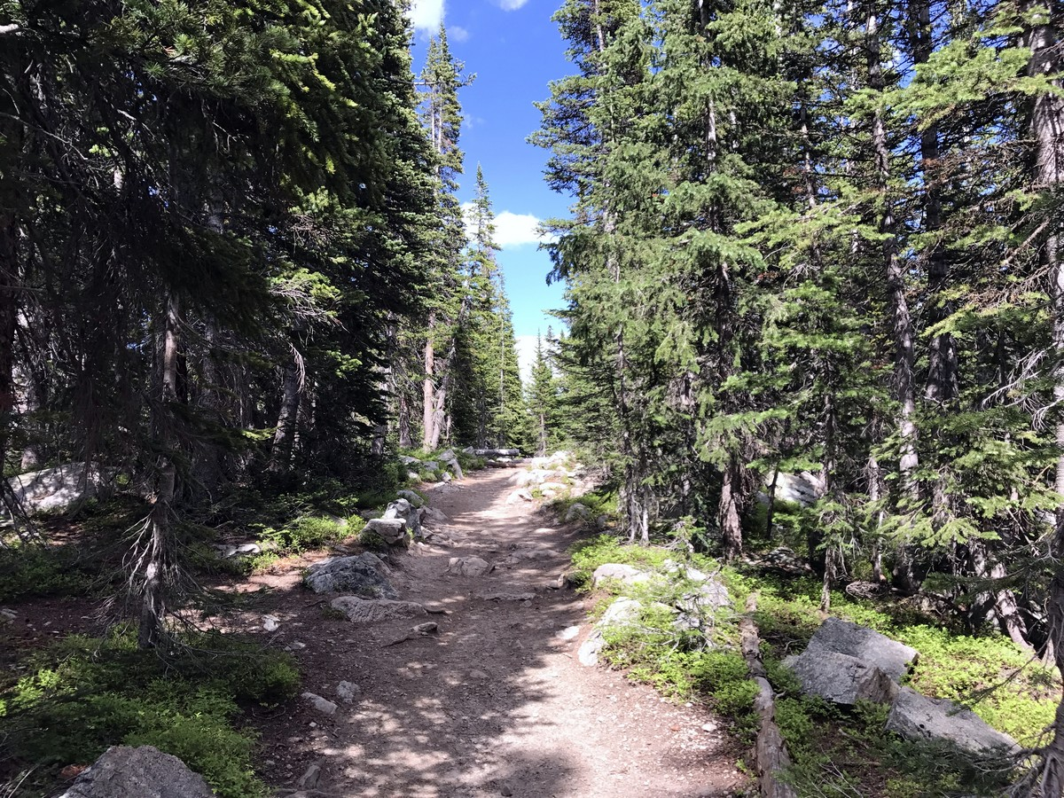Walking through the forest on the Long Lake Trail Hike in Indian Peaks, Colorado