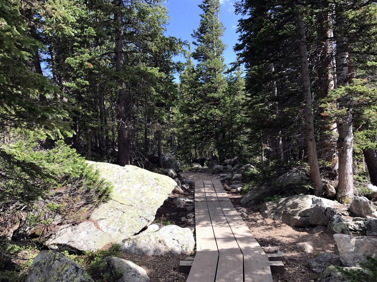 Forest on the Long Lake Trail Hike in Indian Peaks, Colorado