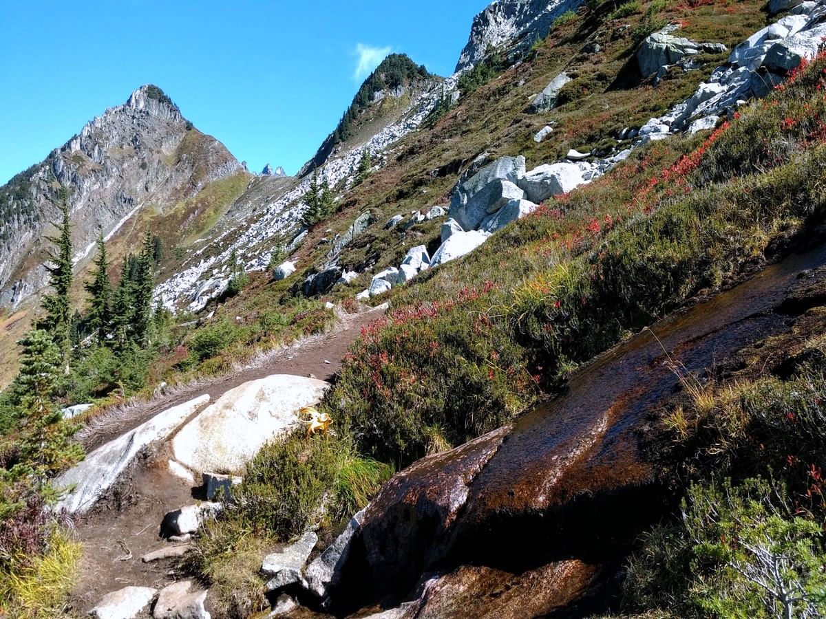Water on the trail to the Hidden Lake, North Cascades, Washington