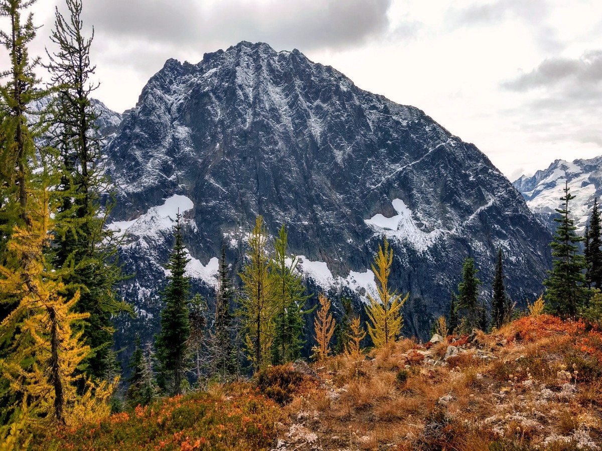 Larches from the Easy Pass trail in North Cascades, Washington
