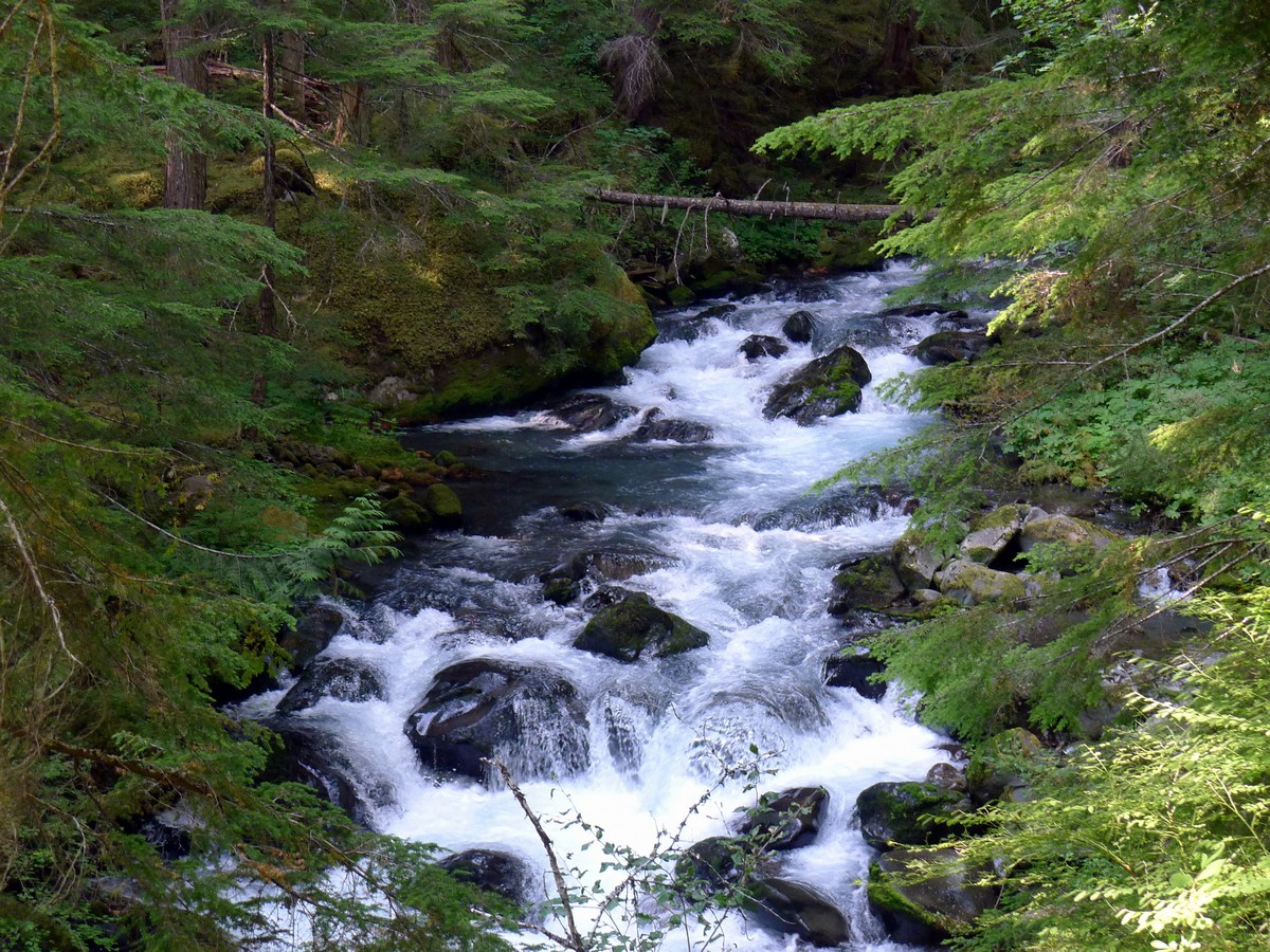 Lush creek on the Royal Basin hike in Olympic National Park
