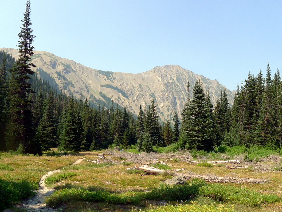 Lower meadows on the Royal Basin hike in Olympic National Park