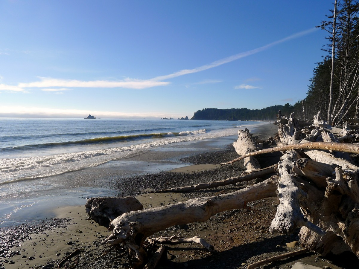 Driftwood on the beach on the Hole in the Wall Hike in Olympic National Park