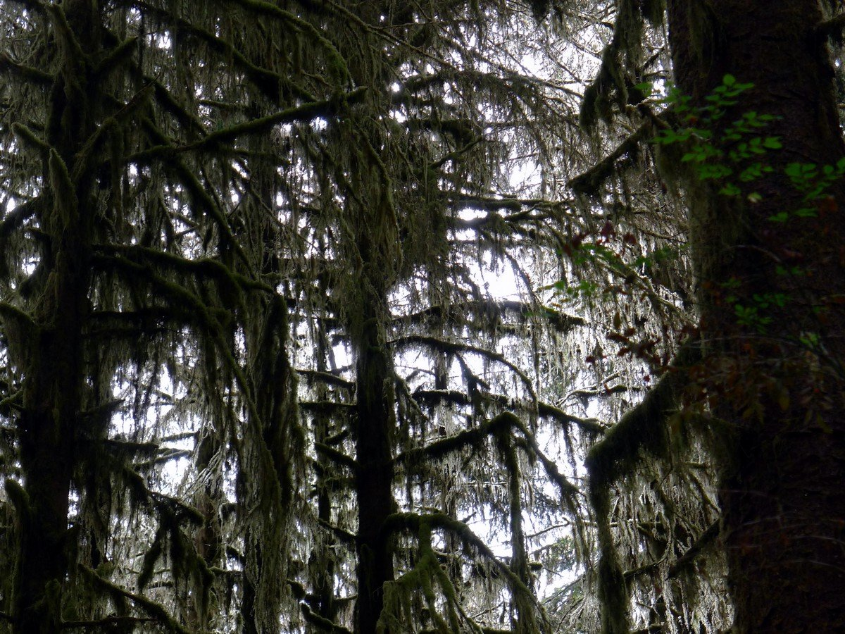 Beautiful scenery of the Hoh River Trail Hike in Olympic National Park