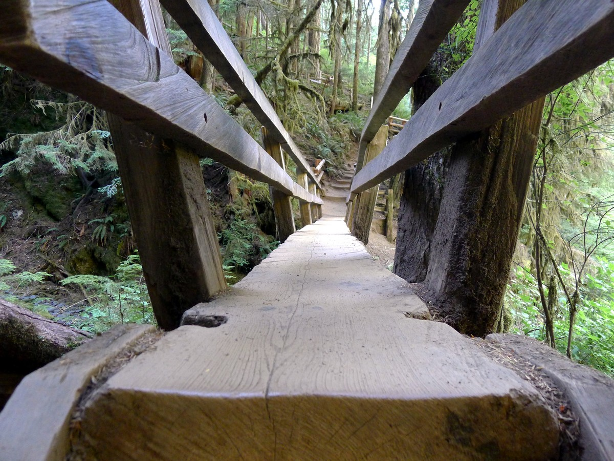 Cool wooden bridge on the Marymere Falls trail in Olympic National Park, Washington