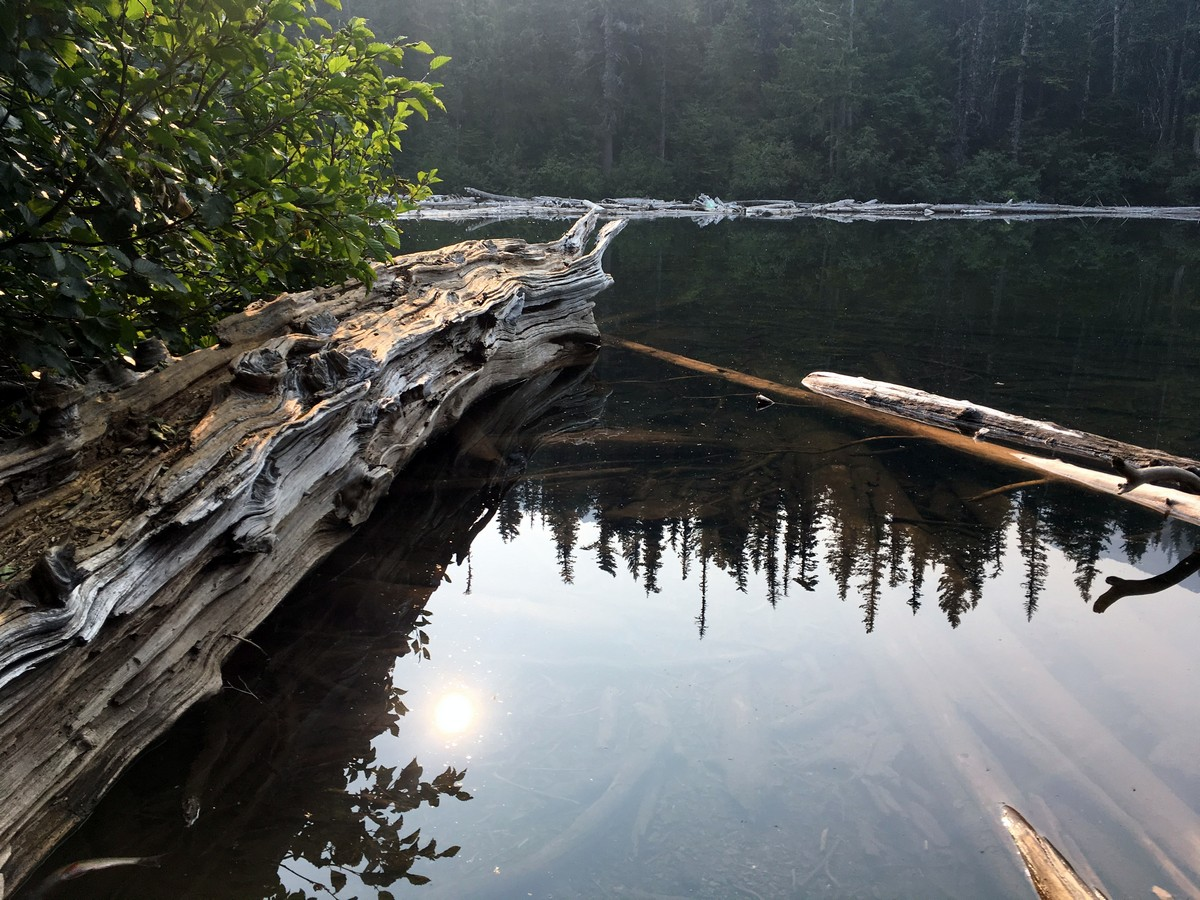 Deadwood in the lake on the Third Beach trail in Olympic National Park, Washington