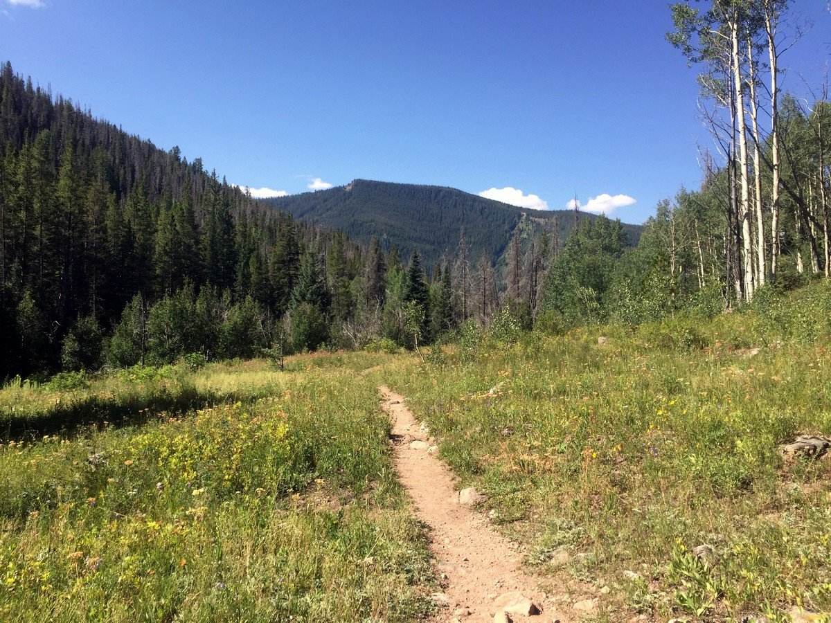 Open meadow on the Pitkin Lake Trail Hike near Vail, Colorado