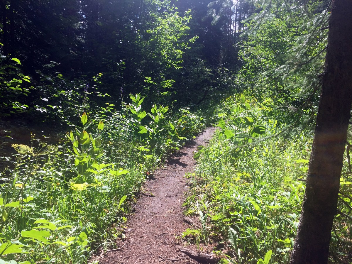 Lush forest on the Bighorn Creek Trail Hike near Vail, Colorado