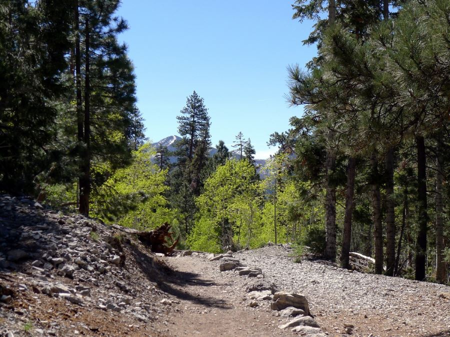 View Of Mountains Behind Trail