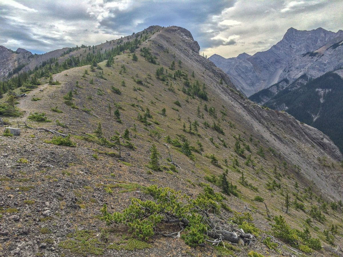 Mountain trail on the Wasootch Ridge Hike in Kananaskis, near Canmore