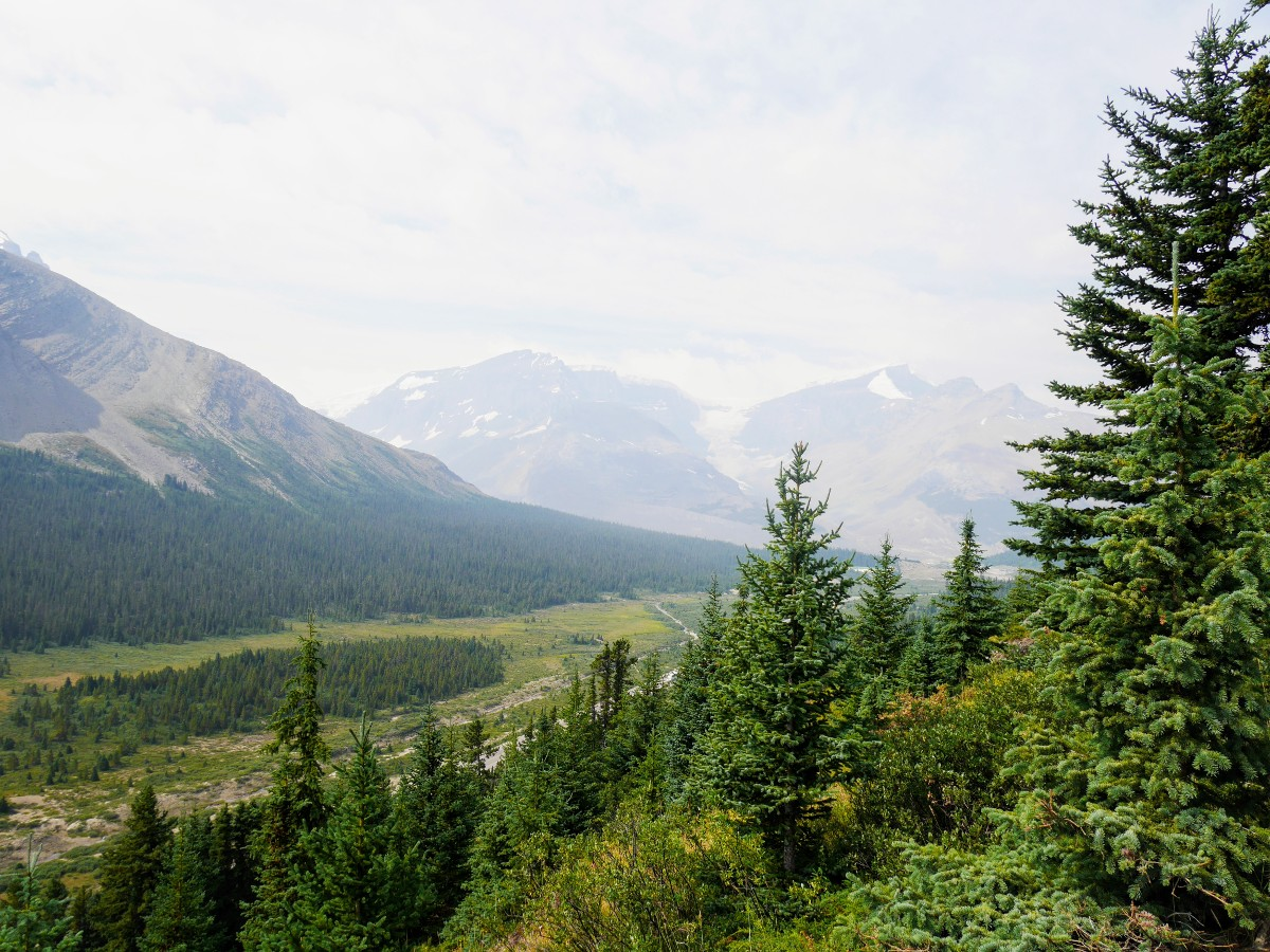 View over Sunwapta Valley on the Wilcox Pass Hike from the Icefields Parkway near Banff National Park