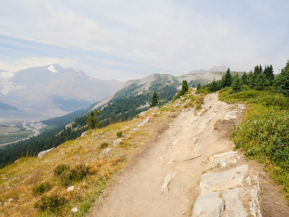 Ridgetop trail on the Wilcox Pass Hike from the Icefields Parkway near Banff National Park