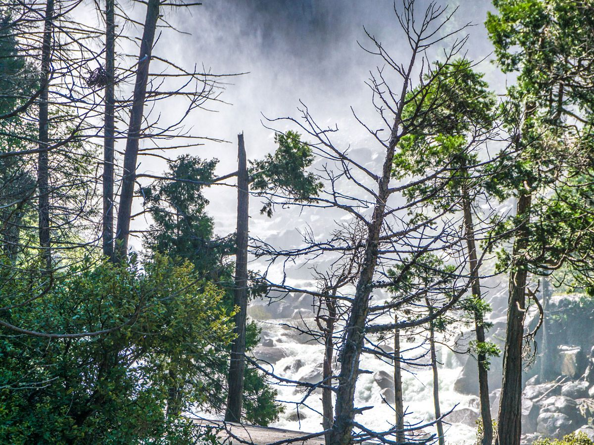 Forest at Yosemite Boot Hike in Yosemite National Park