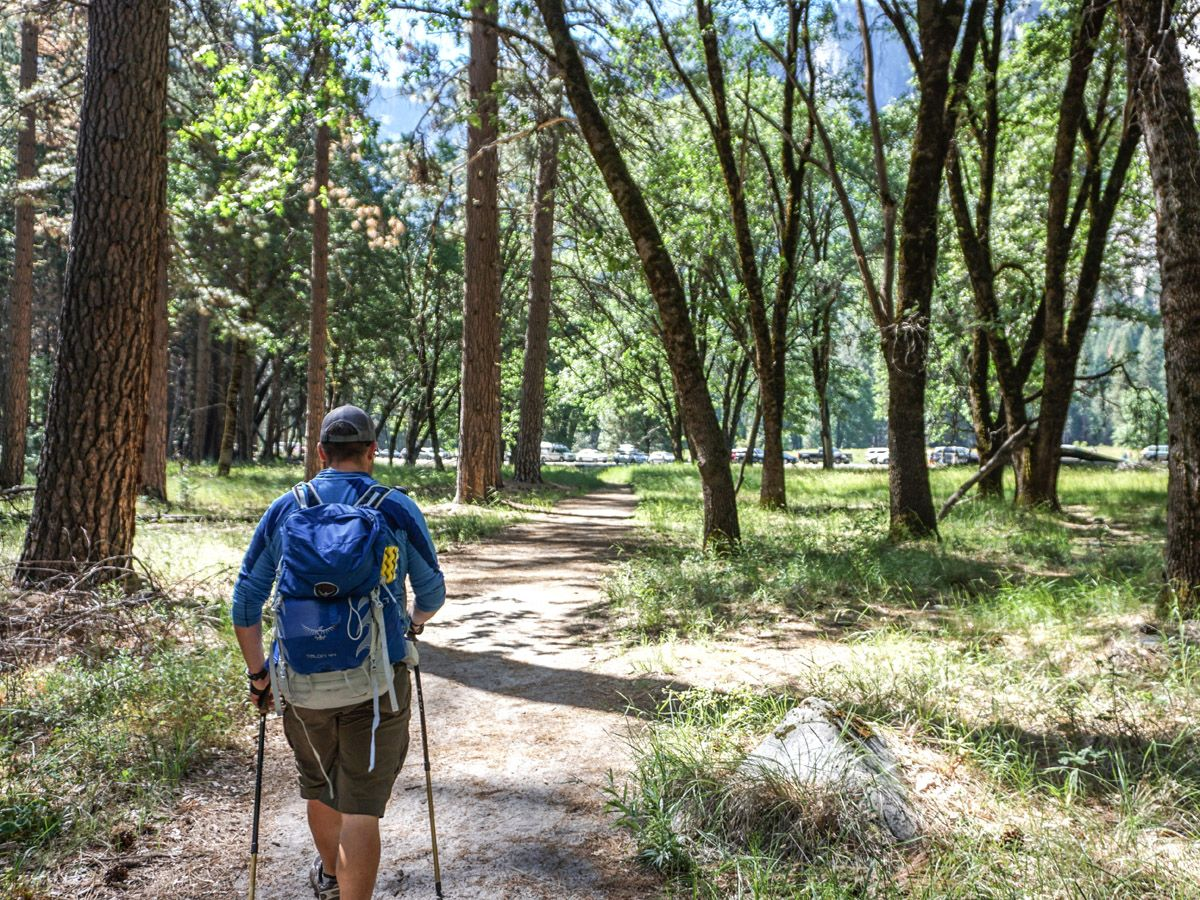 Man hiking on trails through the woods at Yosemite Valley Hike at Yosemite National Park