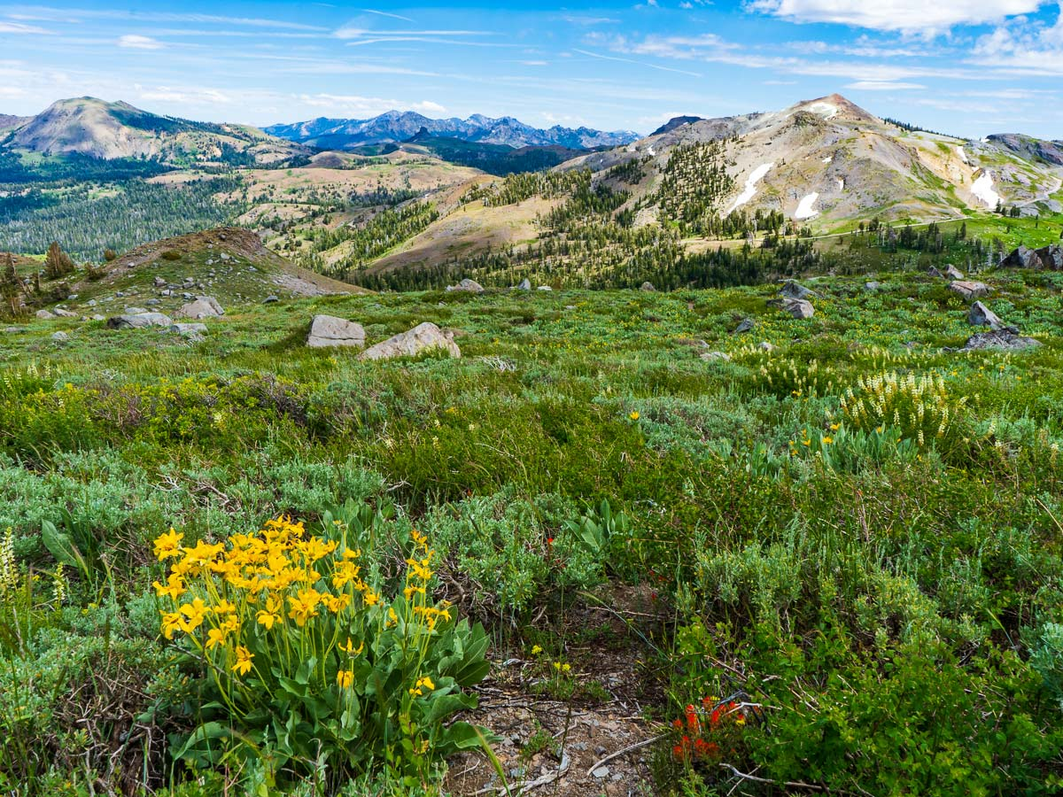 Wildflowers and distant peaks on the Pacific Crest Trail