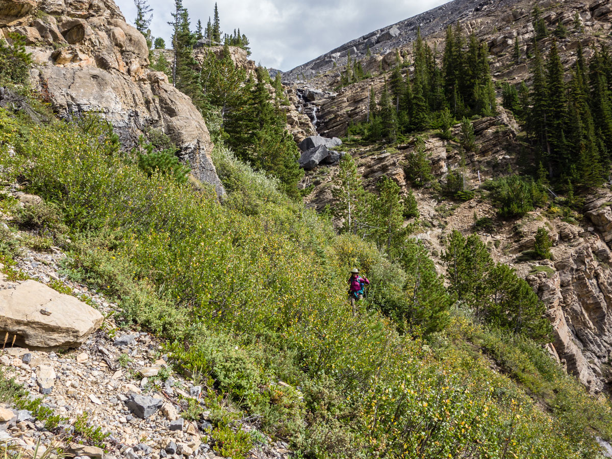 Trail through bushes on Little Hector scramble in Banff National Park
