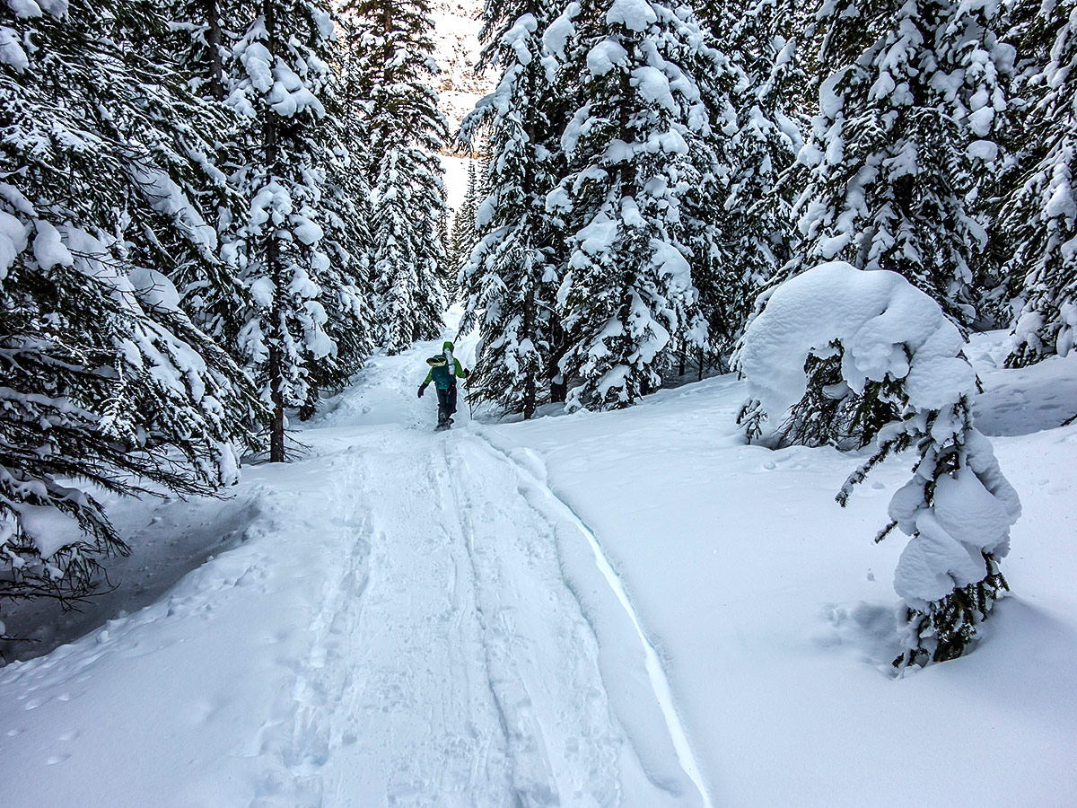 Among the trees on Crystal Ridge snowshoe trail Banff National Park