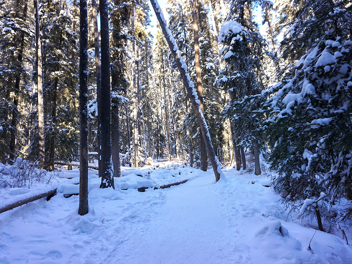 Path through the forest on Johnston Canyon snowshoe trail in Banff National Park