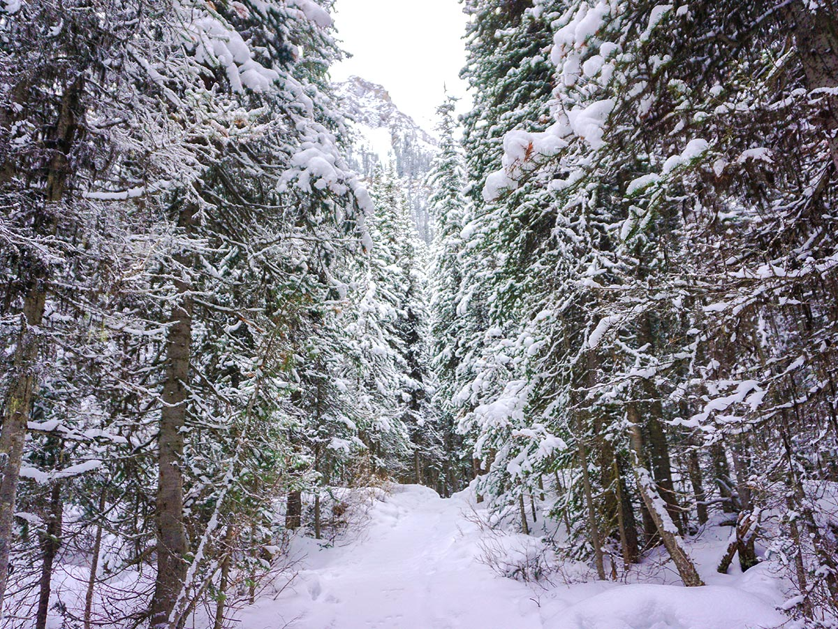Path among the trees on Paradise Valley snowshoe trail near Lake Louise in Banff National Park