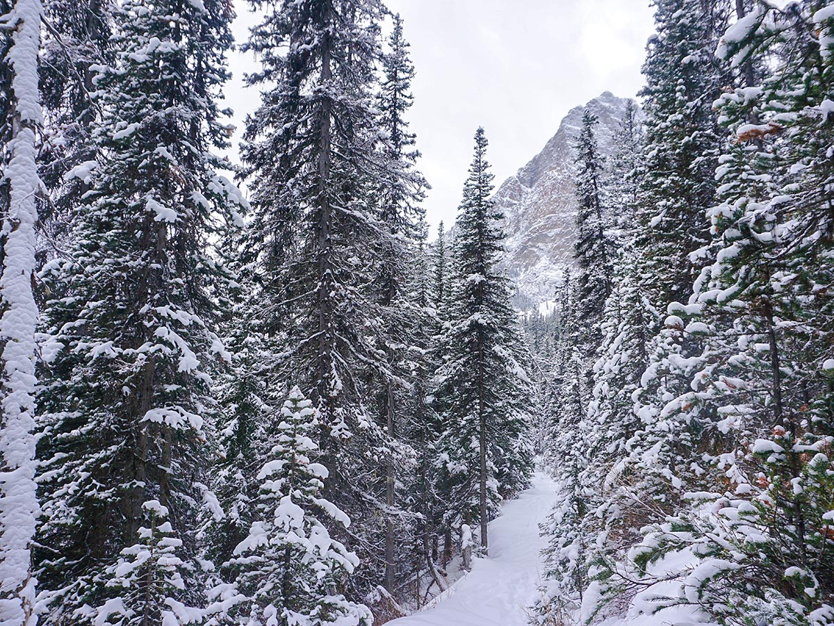 Approaching the valley on Paradise Valley snowshoe trail near Lake Louise in Banff National Park