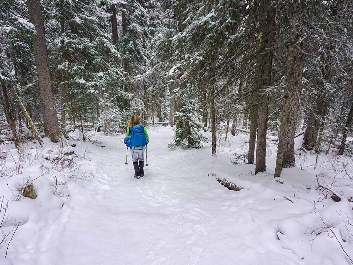 Path through the forest on Paradise Valley snowshoe trail near Lake Louise in Banff National Park