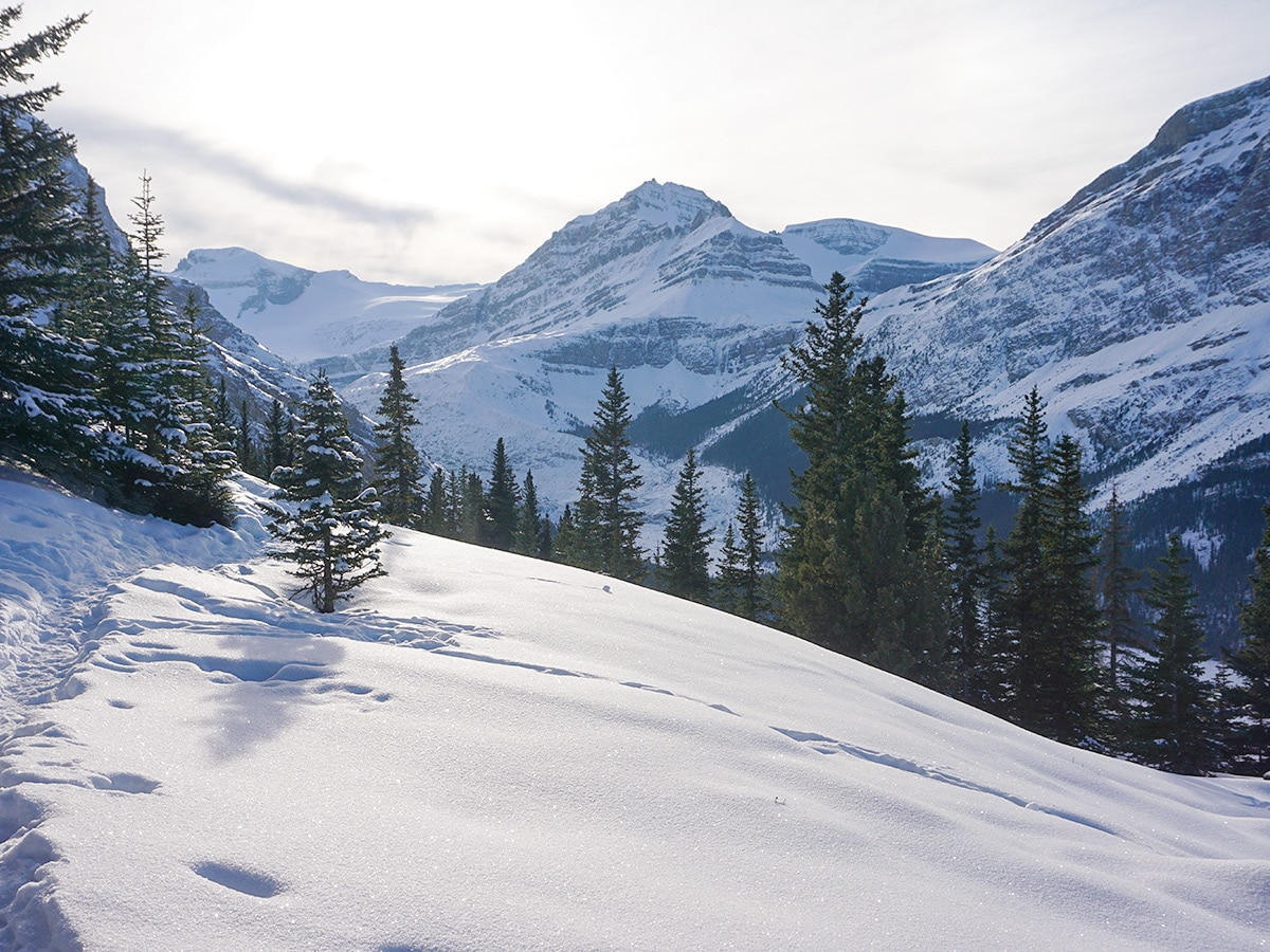 Snowy mountains along Peyto Lake Viewpoint snowshoe trail in Banff National Park