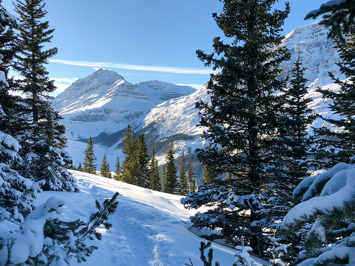 Winter paradise on Peyto Lake Viewpoint snowshoe trail in Banff National Park