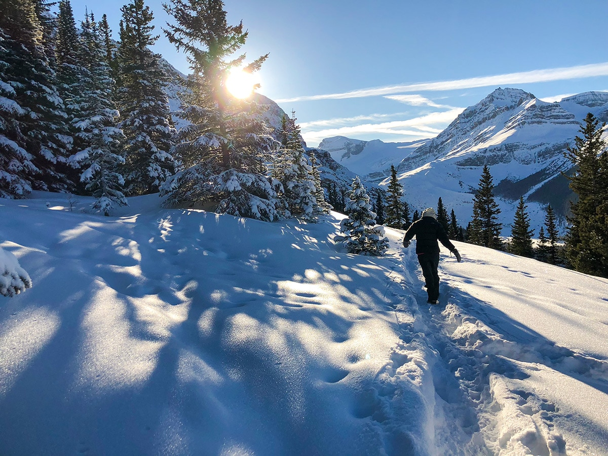 Peyto Lake Viewpoint snowshoe trail in Banff National Park rewards with amazing view of the valley