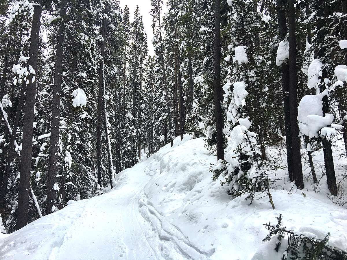 Route among trees on Taylor Lake and Panorama Meadows snowshoe trail in Banff National Park