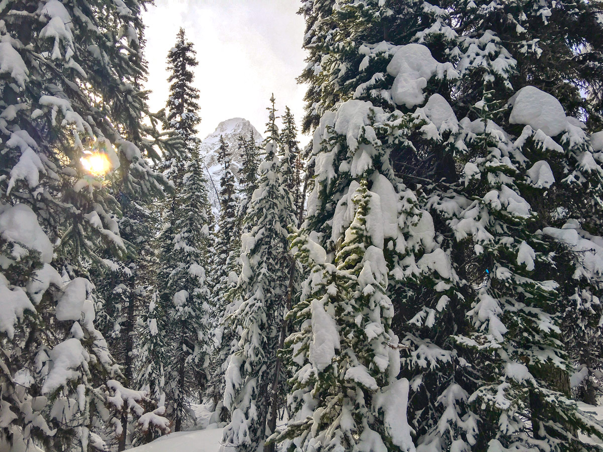 Snowy winter along Taylor Lake and Panorama Meadows snowshoe trail in Banff National Park
