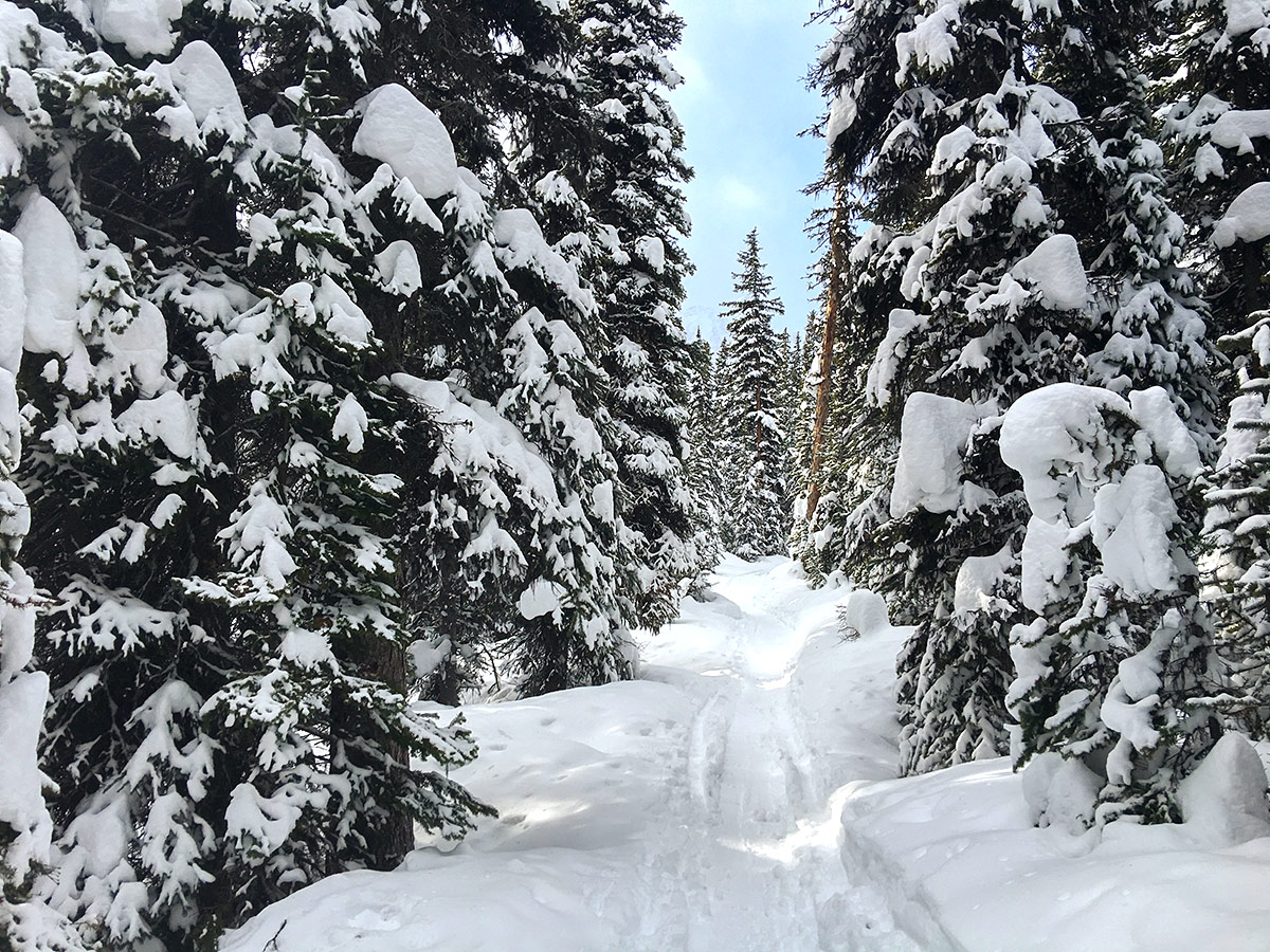 Path through the woods on Taylor Lake and Panorama Meadows snowshoe trail in Banff National Park