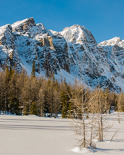 Taylor Lake and Panorama Meadows snowshoe trail in Banff National Park