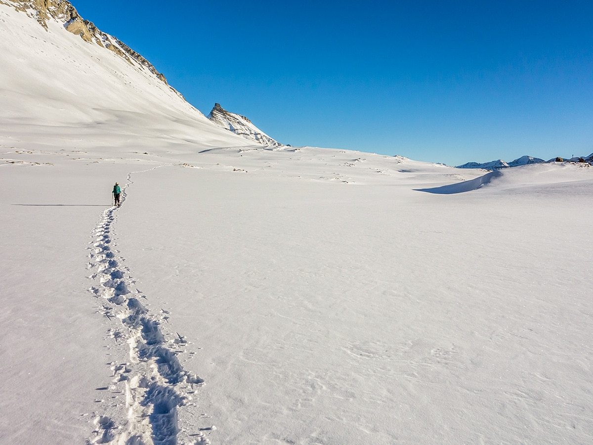 Trail of Wilcox Pass snowshoe in Banff National Park