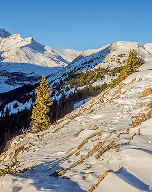 Wilcox Pass snowshoe trail in Banff National Park