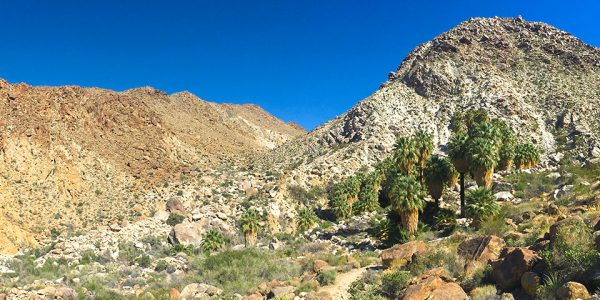 Best family-friendly hikes in Joshua Tree, California