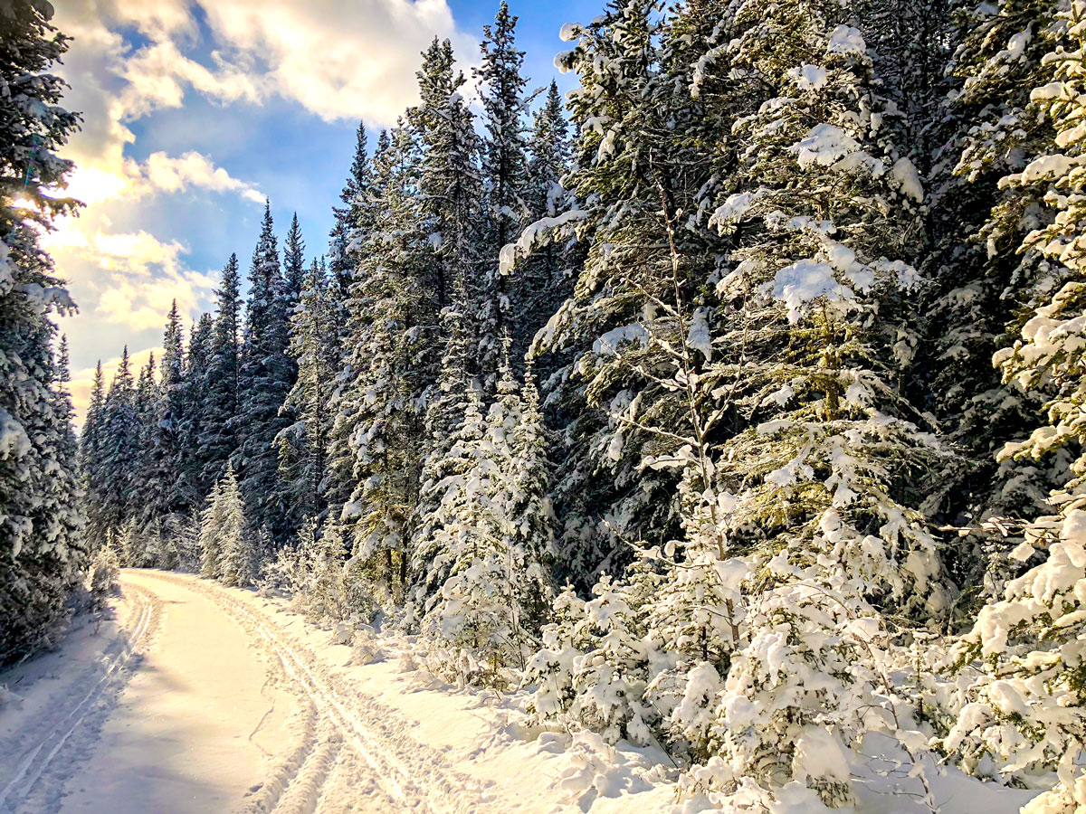 Heavy snow on Cascade Valley XC ski trail in Lake Louise, Banff National Park