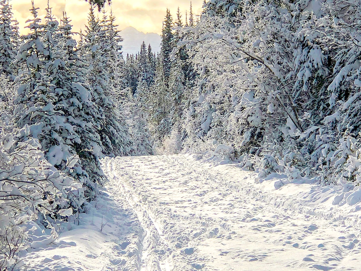 Path through the woods on Cascade Valley XC ski trail in Lake Louise, Banff National Park