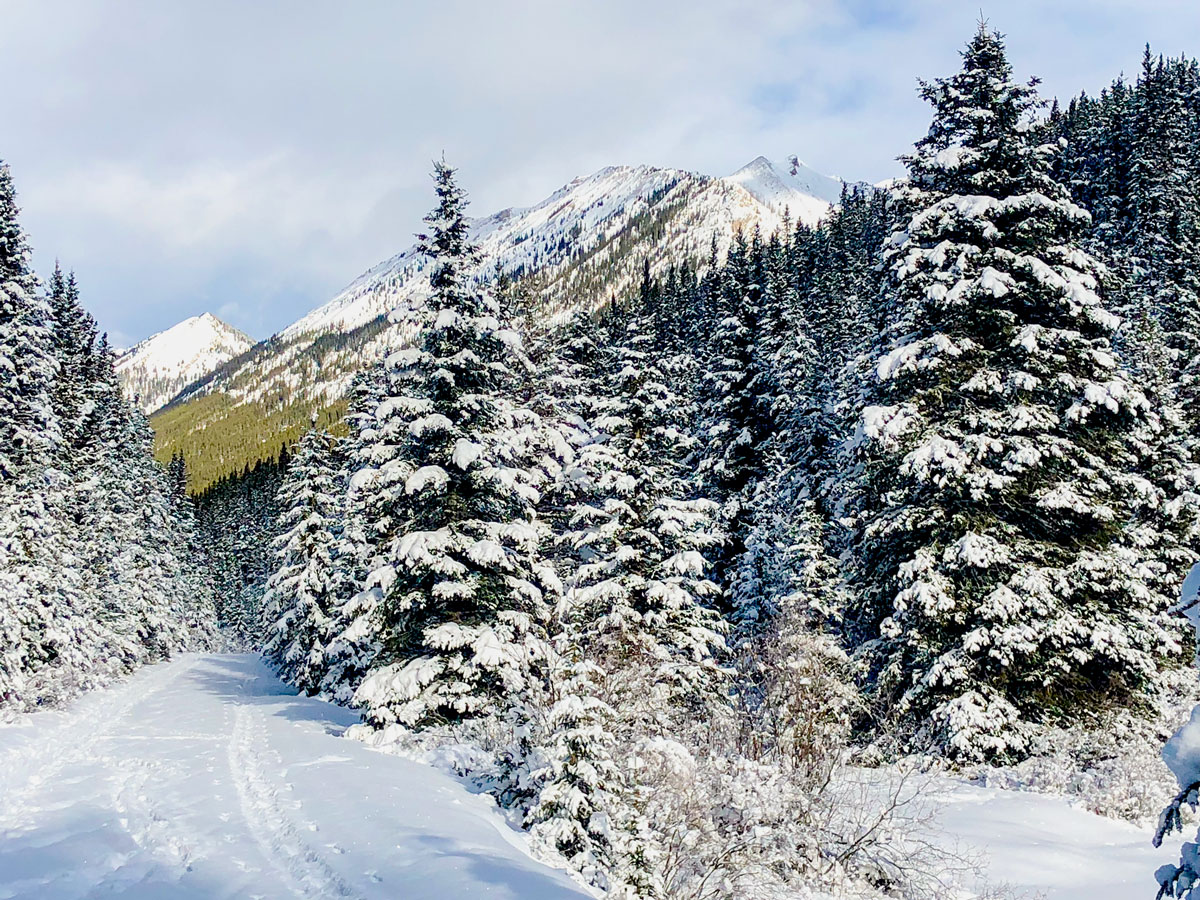 Beautiful view on Cascade Valley XC ski trail in Lake Louise, Banff National Park