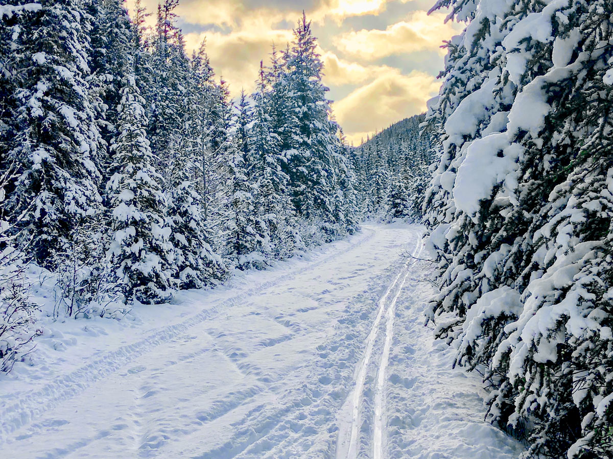 Nice scenery on Cascade Valley XC ski trail in Lake Louise, Banff National Park